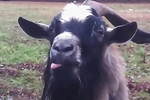Skrillex &_ Damian Marley - Make It Bun Dem (Animal Cover) [only animal sounds]